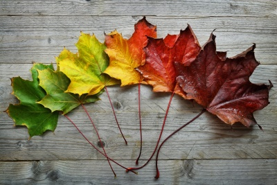 coloured leaves representing different seasons through the year